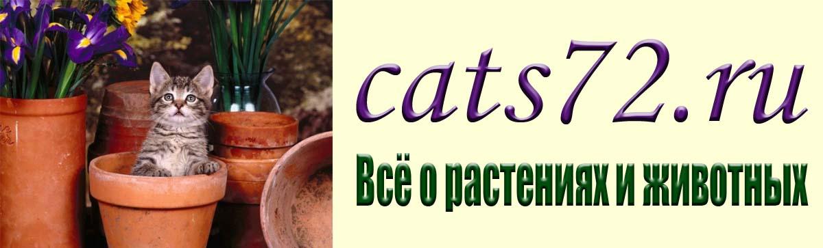 cats72.ru Все о растениях и животных